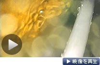 東京電力は福島第1原発2号機の格納容器内の映像を公開した